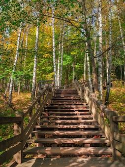秋の白樺の木立の空の緑の生態学的トレイル