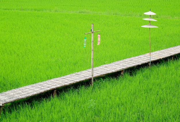 녹색 논에 민족 스타일 장식으로 빈 긴 대나무 다리