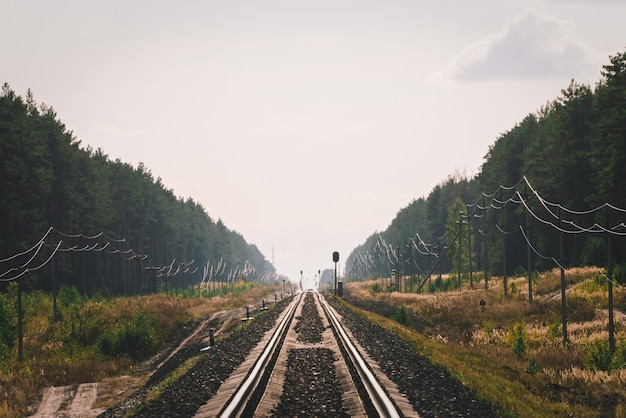 Empty long railroad in perspective. mystic phenomenon on horizon on rail in forest.