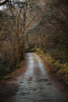 Empty narrow dirt road running through leafless thick woodland on cold autumn day