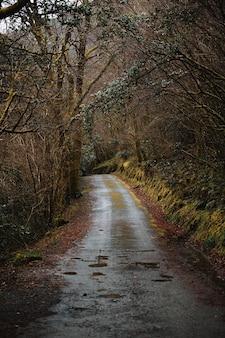 추운 가을 날에 잎이없는 두꺼운 삼림 지대를 통과하는 빈 좁은 비포장 도로
