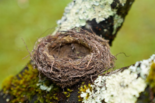 Empty natural small bird nest in tree branch