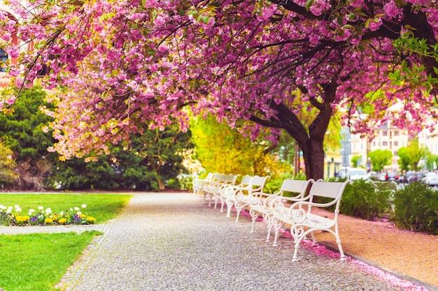 Пустой парк с цветущей сакурой, цветочной лужайкой и белыми скамейками.