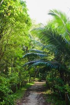 열대 녹색 정글 내부 빈 경로