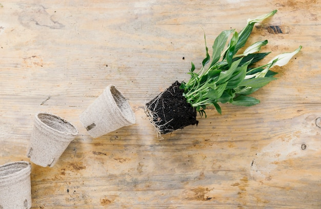 Empty peat pot and plant with soil on wooden background