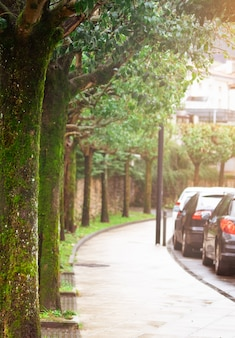 Empty pedestrian sidewalk. old trees with moss and lichen beside pavement and the street. cars parked on roadside parking. old trees at curve road. empty pedestrian way. no people on the pavement.