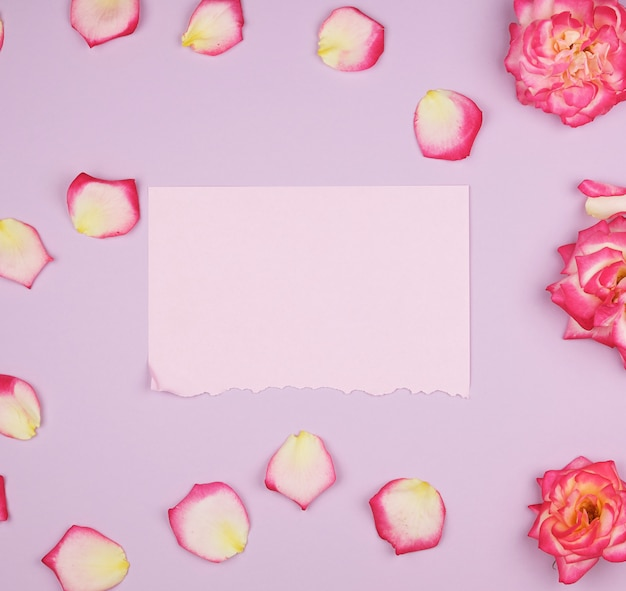 Empty pink paper sheet and buds of pink roses, festive surface