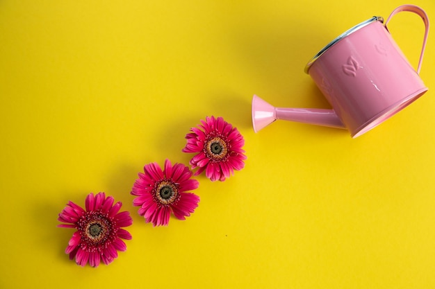 Empty pink watering can and three crimson gerbera flowers lying diagonally.
