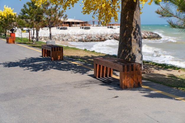 Empty promenade along the sea with a blue sky and plants, empty benches for relaxation, there are no people quarantine pandemic.