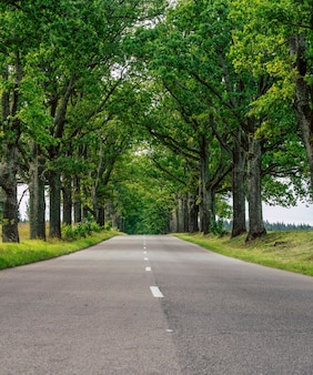 緑の葉のオークの路地の間の先の空の道-春の日