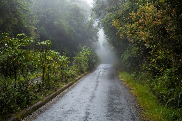 Empty road along with rainforest at costa rica