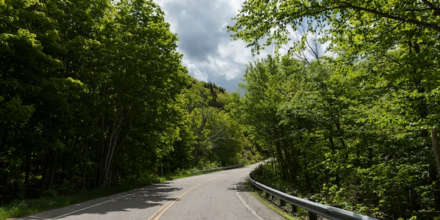 Empty road amidst trees in forest, pleasant bay, cape breton highlands national park, cape breton is