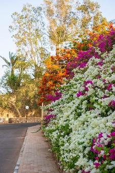 샤름 엘 셰이크의 이집트 거리에 있는 빈 도로, 화려한 꽃과 야자수