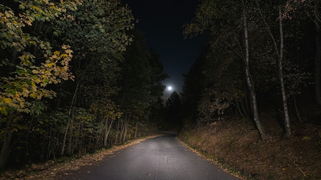 Empty road crossing pine tree woodland illuminated by moon. loneliness and fear.