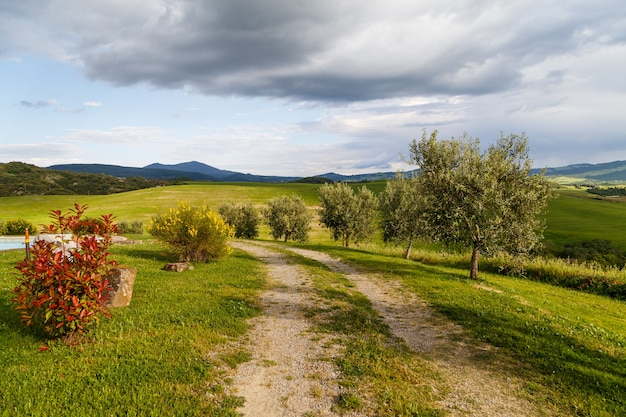 시골의 빈 도로 젊은 올리브 나무 산 극적인 하늘 투스카니 이탈리아