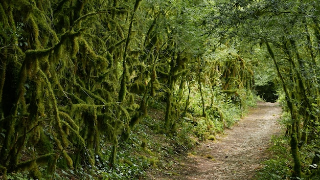 An empty road surrounded by mossy green trees