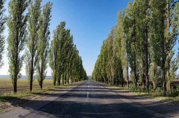 ポプラの木のある空の道