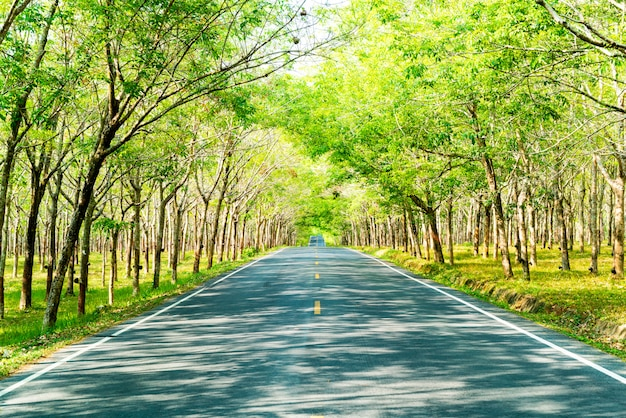 Empty road with tree arch or tunnel