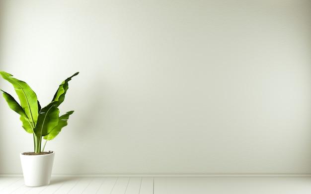 白い木の床のインテリアデザインと装飾の植物に白い空の部屋。3dレンダリング