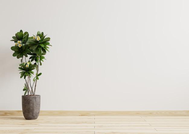 床に横向きに美しい植物と空の部屋の白い壁。3dレンダリング。