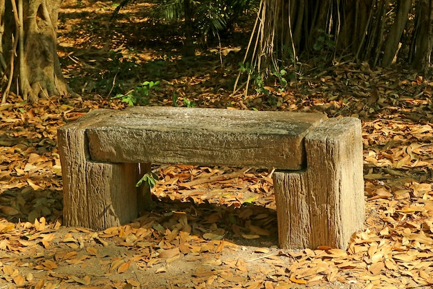 Empty rustic wooden bench in the autumn park