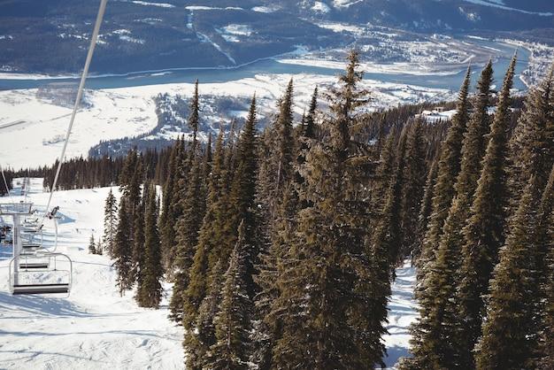 스키장에서 빈 스키 리프트와 소나무