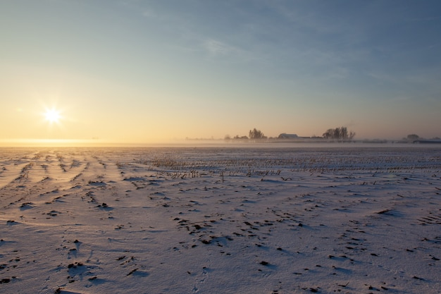 Empty snowy field with mist under a blue sky