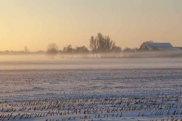 Empty snowy field with mist and trees in the distance
