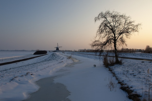 Empty snowy field with a tree and windmill buildings n the distance