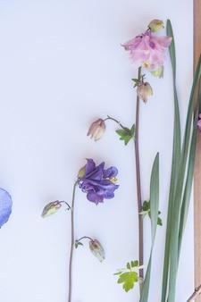 Пустое пространство белый фон с цветами, милый цветочный макет