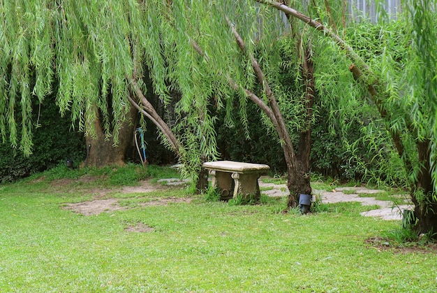 Empty stone bench in the public park among green foliage