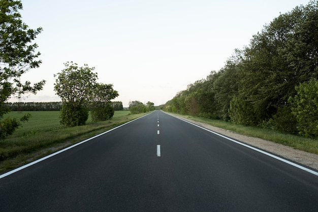 Пустая улица и красивые деревья
