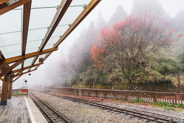 Empty train rails in alishan forest railway stop with trees and fog.