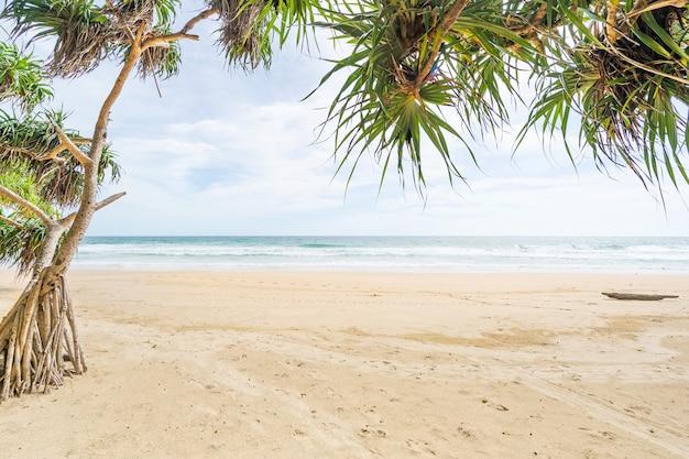 빈 열 대 여름 해변 배경 푸른 하늘과 하얀 모래 해변 녹색 나무 잎 프레임 모래 해안에 부서 지는 파도 태국 푸 켓에서 놀라운 해변입니다.