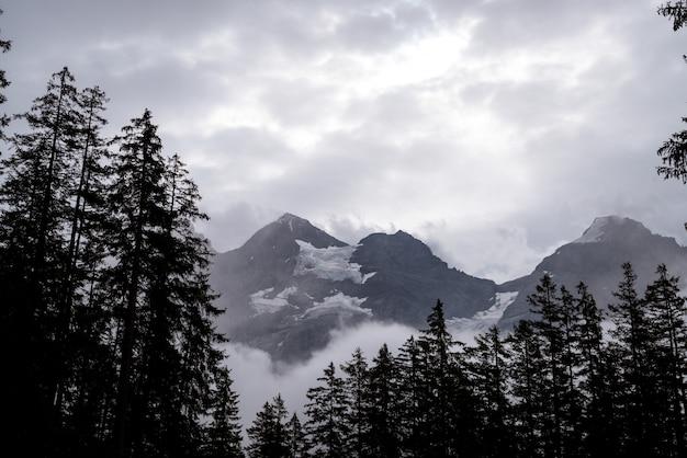 森と霧の空の道