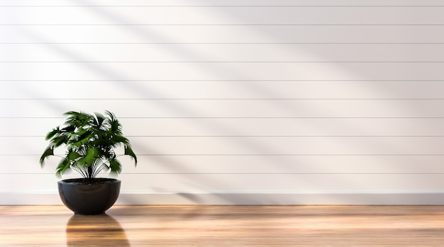 Пустой белый фон стены с солнечным светом и тенью