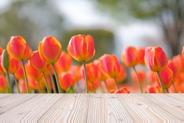 Empty wood table with orange tulip flower background in spring season