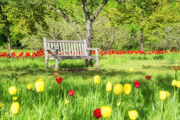 Empty wooden bench among fresh greenery in a park