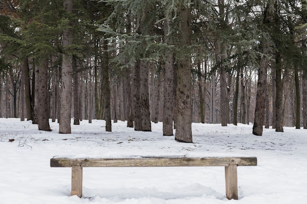 Empty wooden bench covered with snow in winter forest