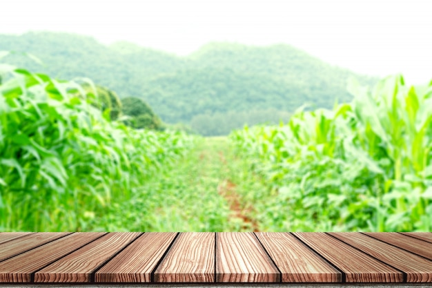 Empty wooden board top table in front of blurred corn field background