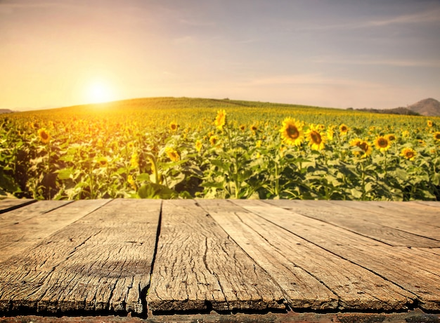 Empty wooden plank with sunflower field