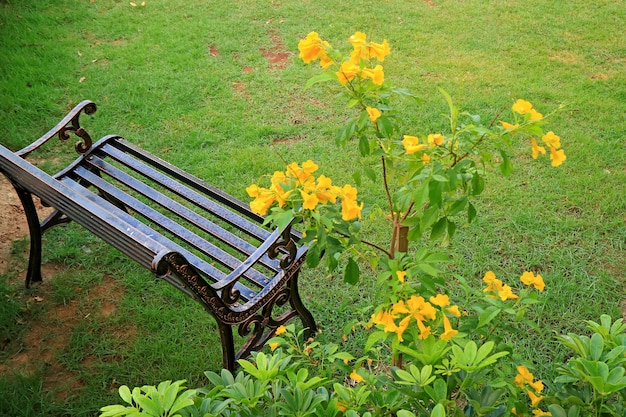 Empty wroth iron bench in light rain with blurry yellow trumpet flowers in foreground