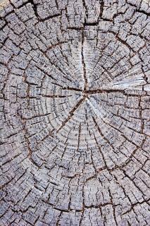 End grain texture, tree
