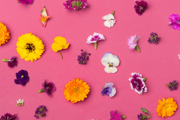 Endible цветы вид сверху