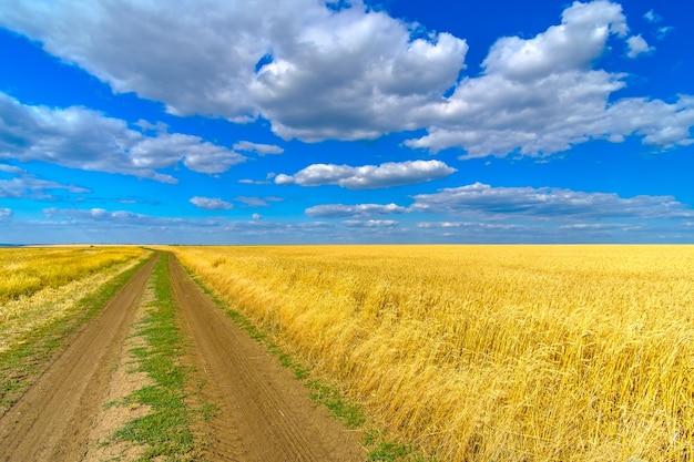 화창한 여름날에 구름과 푸른 하늘의 익은 밀의 황금 귀를 가진 끝없는 필드입니다. 필드를 따라 비포장 도로.