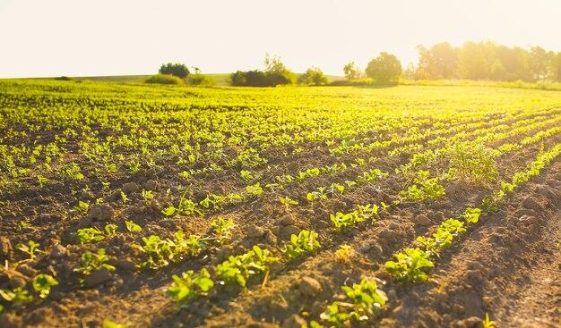 종자 침대가 있는 끝없는 들판. 친환경 농업 현대적인 아이디어. 소박한 자연 사진입니다.