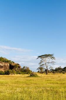 Бескрайняя равнина серенгети. танзания, африка
