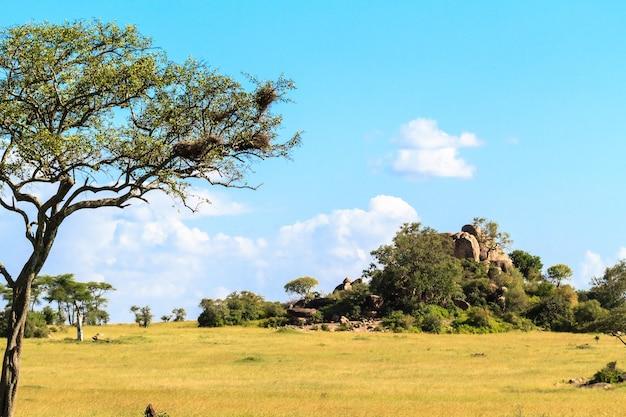 セレンゲティの果てしないサバンナ。丘と木々と青い空。タンザニア、アフリカ