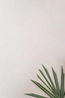 Estremità di foglia di palma