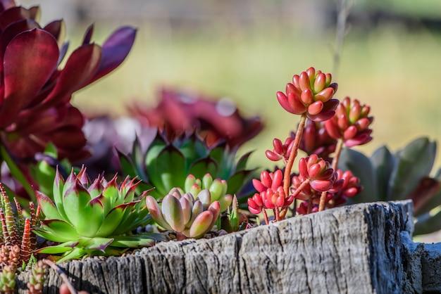 활기차고 즙이 많은 식물